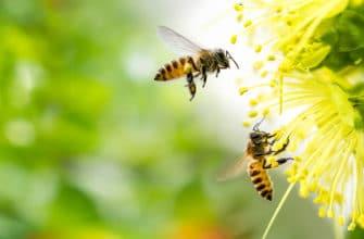 Мёд диких пчел