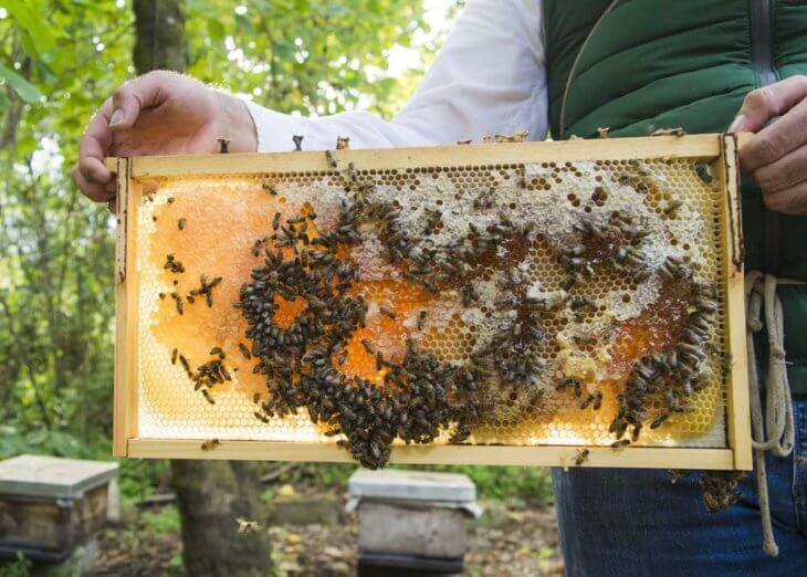 медовая рамка с пчелами