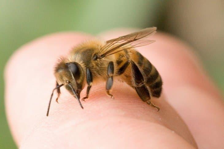 пчела на руке