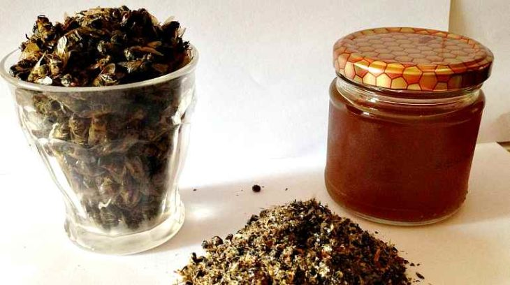 мед и подмор