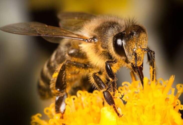 цветок с пчелой