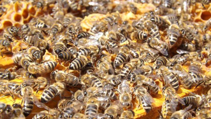подмор пчелы
