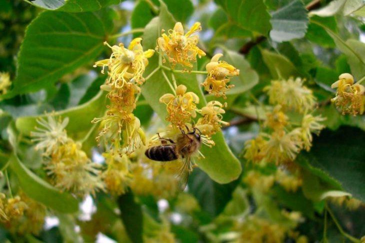 сбор компонентов для создания медового нектара
