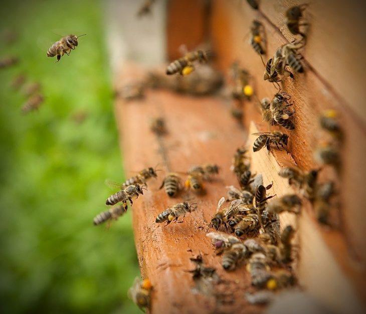 пчелы около улья