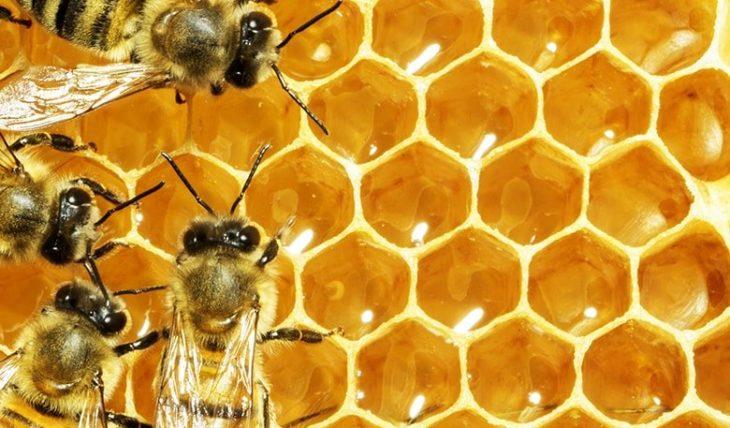 сотовый мед с насекомыми