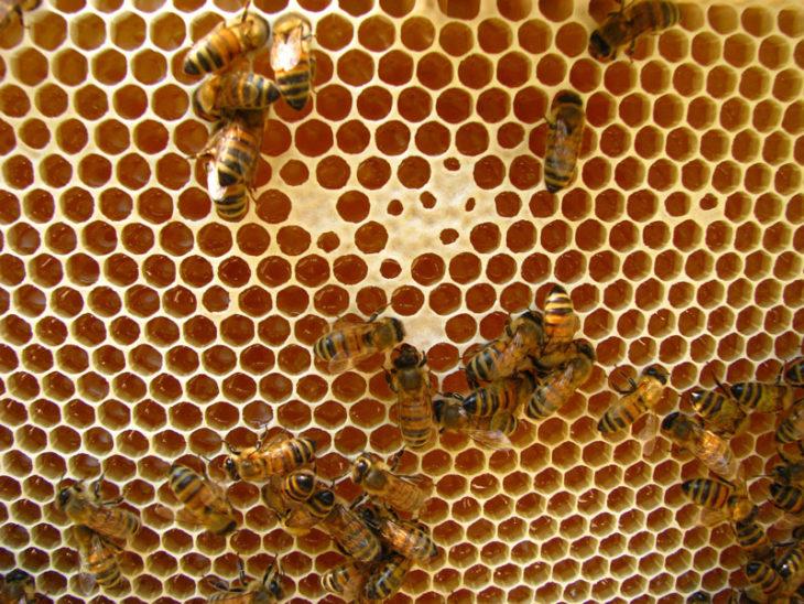 соты с медом и пчелами