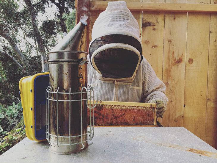 бипин и обработка пчел