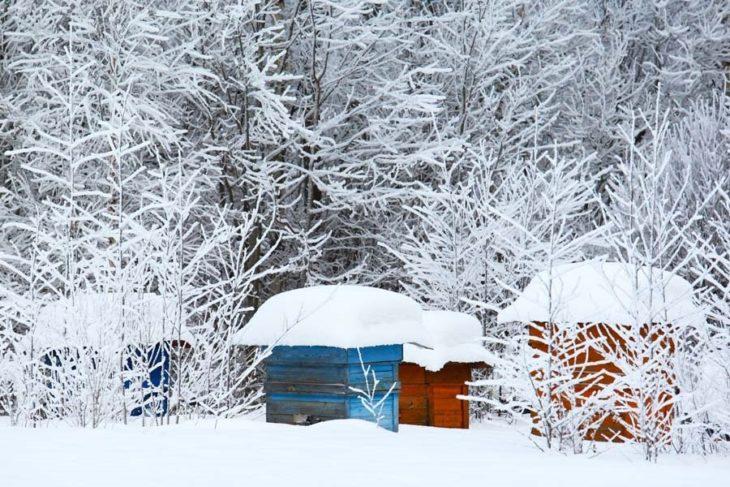 период зимовки на пасеке