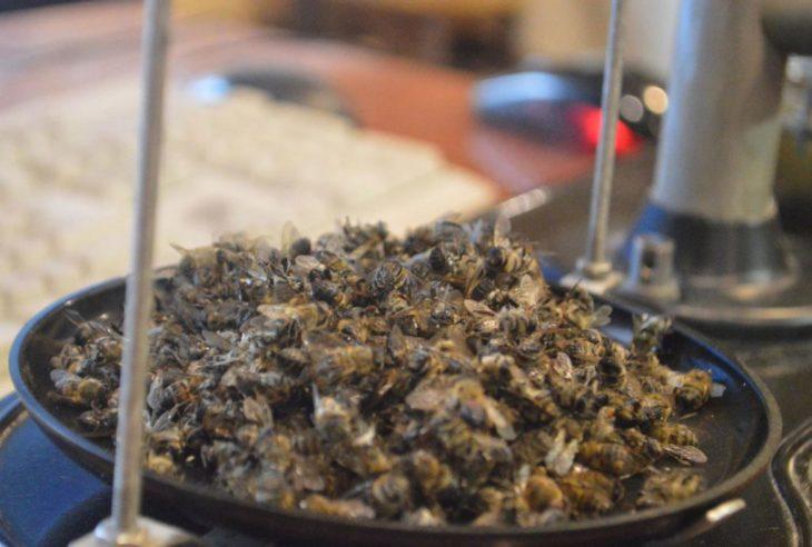 весы с пчелиным подмором