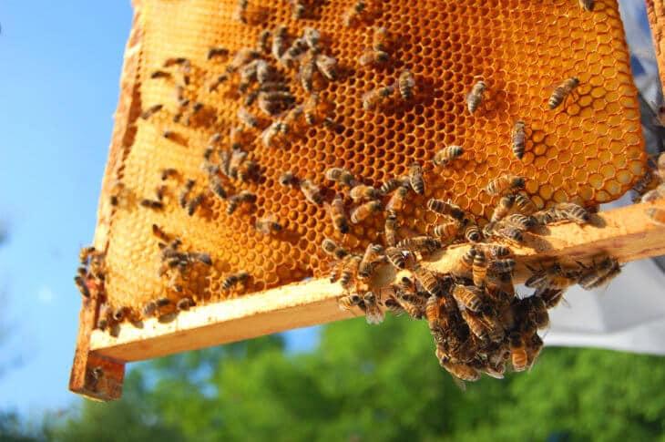 пчелиный сотовый мед