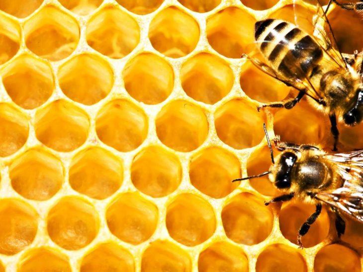 желтые пчелиные соты