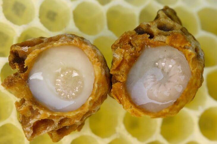 натуральное маточное молочко с личинками