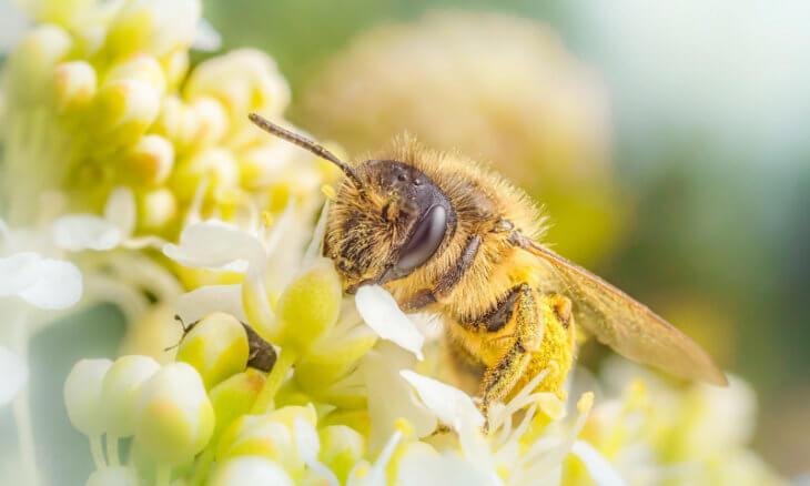 сбор нектара с цветов