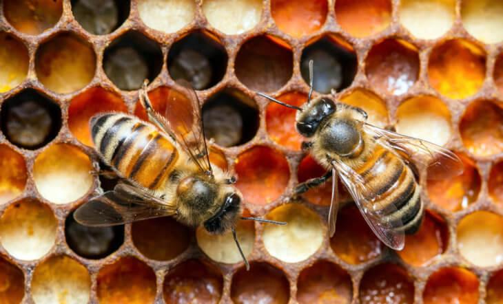медовые соты с пчелками