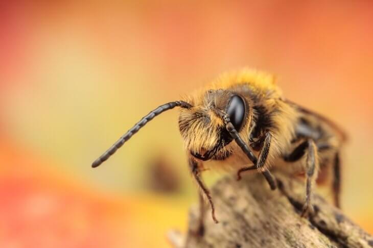 насекомое-медонос