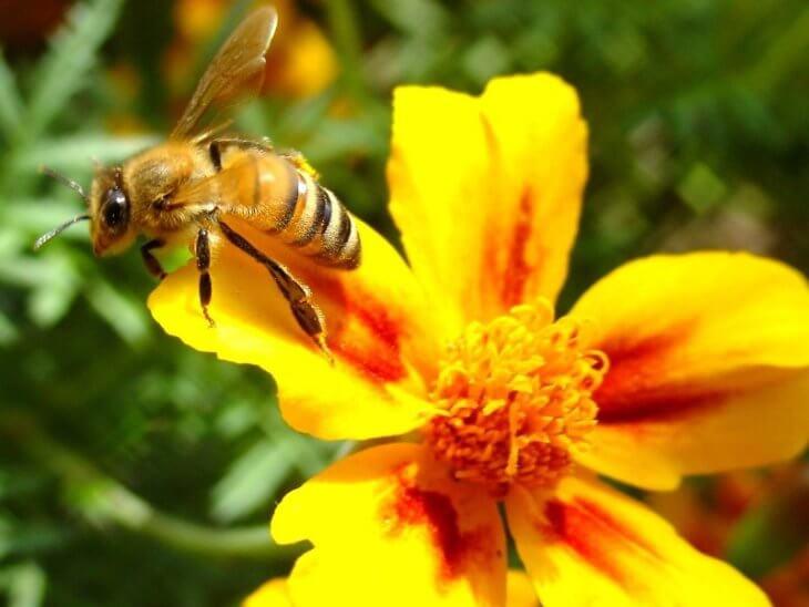 цветок с пчелами