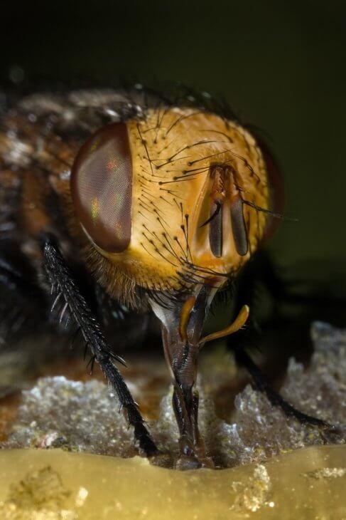 макросъемка пчелы
