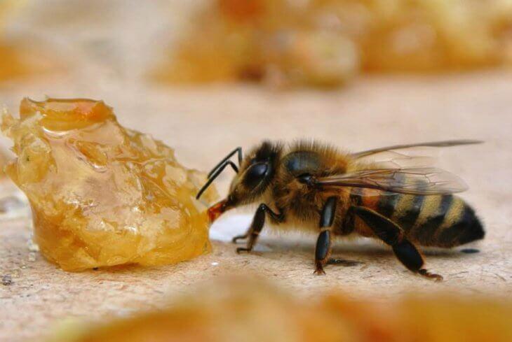 мед с пчелкой