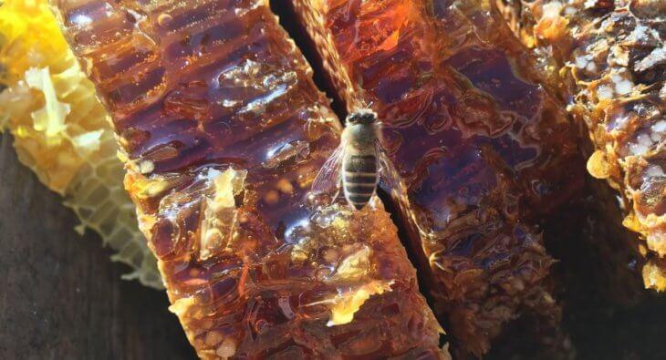 сотовый мед с пчелой