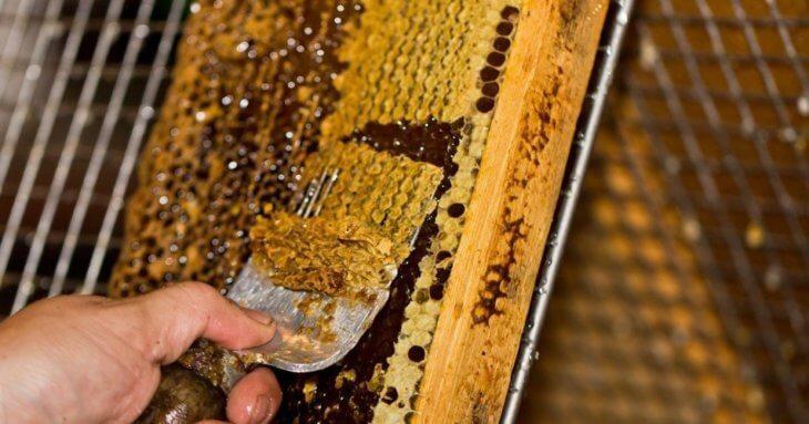 забрус с сотовым медом и прополисом