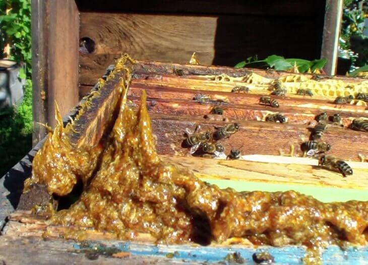 натуральный зеленый мед
