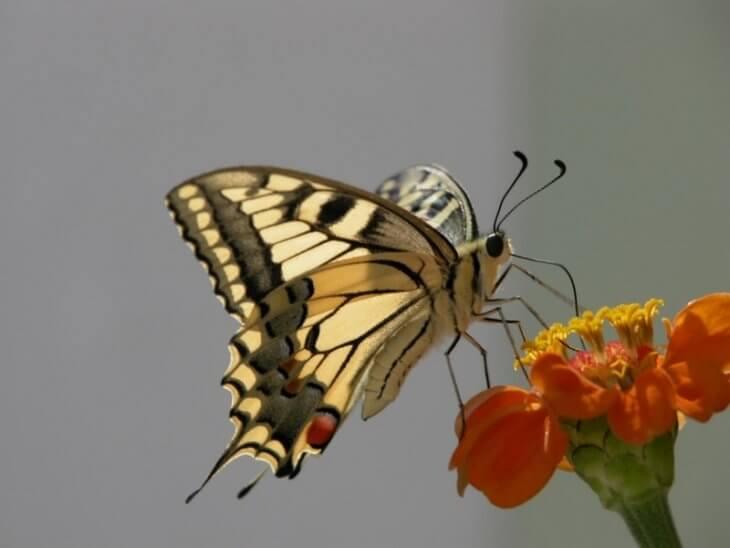 альтернатива пчелам