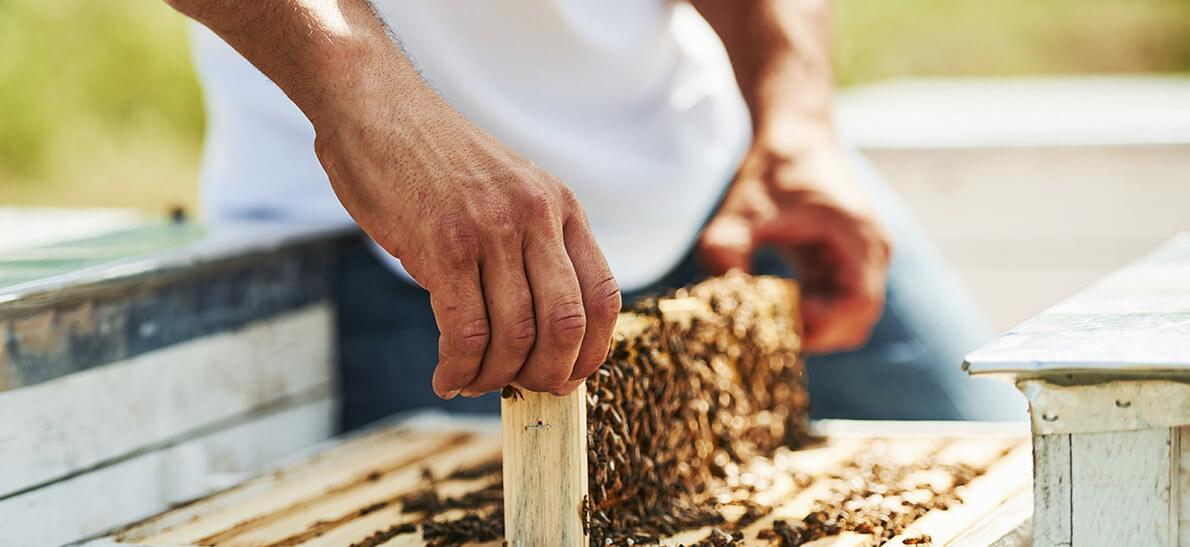 Продукты пчеловодства для повышения потенции