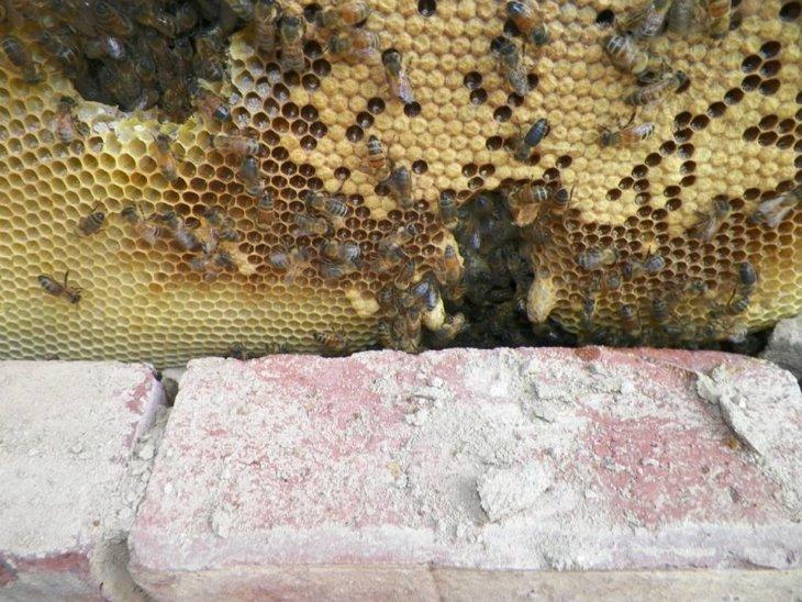 чего боятся пчелы